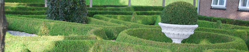 Buxus en andere planten online kopen